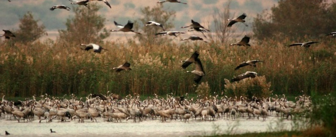 Israel Bird Watching Trip